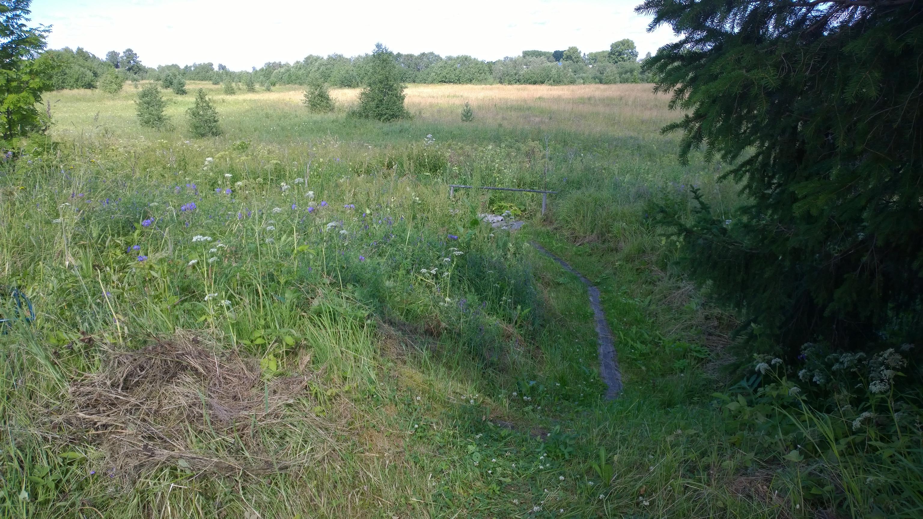 Пихтовые веники для бани: как запарить и хранить веник из пихты?