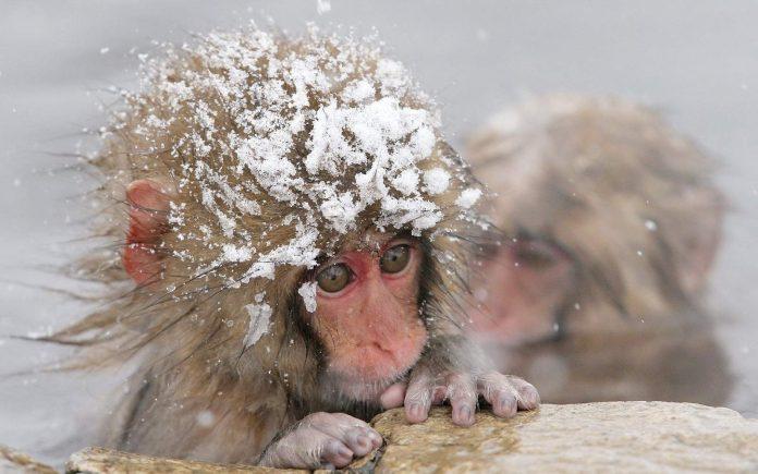 Как растираться снегом после бани