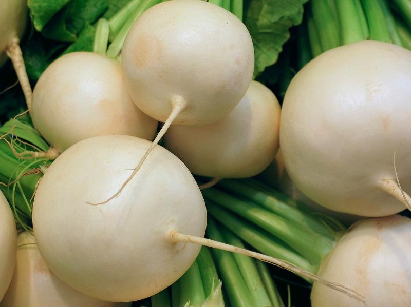 корнеплод белой редьки