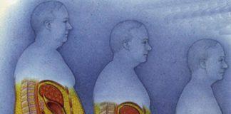 внутренний жир