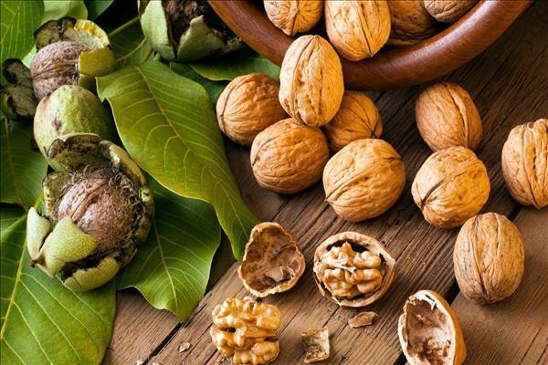 Черный орех польза и вред для организма