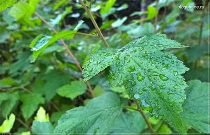 мокрый лист