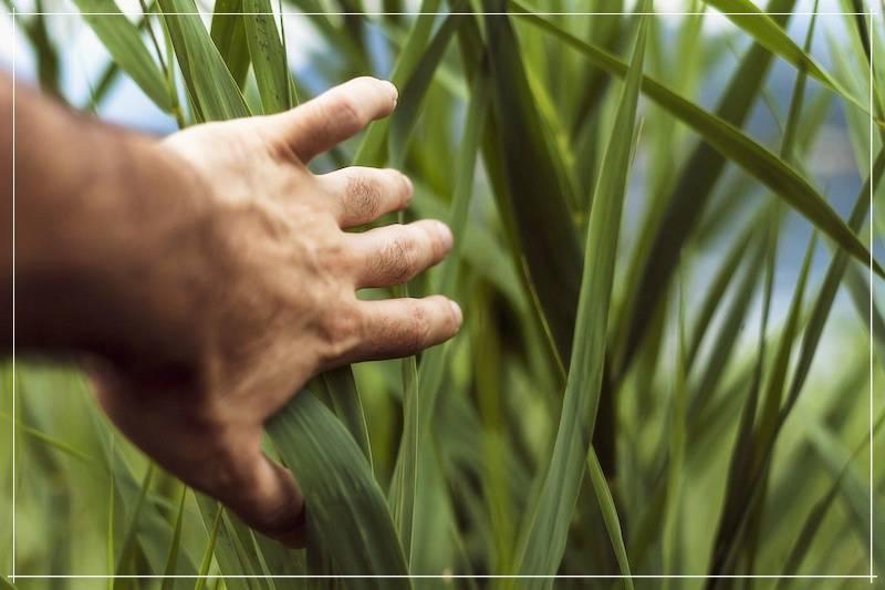Как париться веником из крапивы и почему это полезно для здоровья